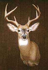 Wisconsin Whitetail Prize